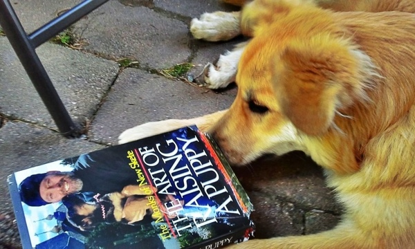 A dog chewing on the book Art of Raising a Puppy