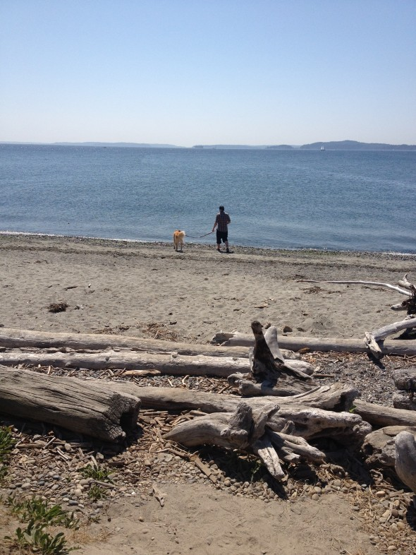 Beachfront views with a man and his dog from Discovery Park, Seattle